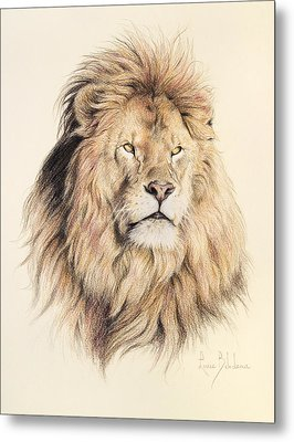 Mufasa Metal Print by Lucie Bilodeau