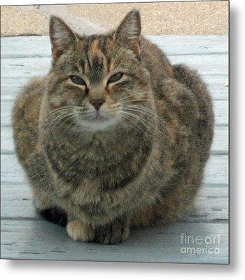 Muffin The Feral Cat Metal Print
