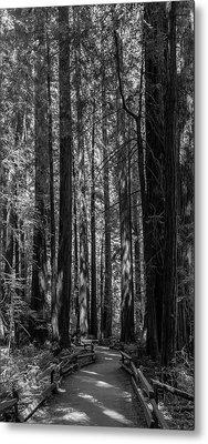 Muir Woods Giants Metal Print