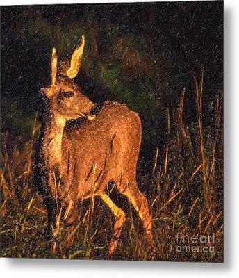 Mule Deer Odocoileus Hemionus Metal Print