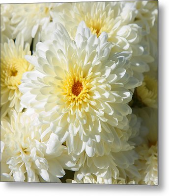 Metal Print featuring the photograph Mums The Word by Courtney Webster