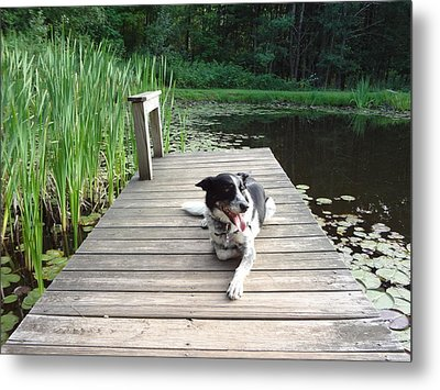 Mundee On The Dock Metal Print by Michael Porchik