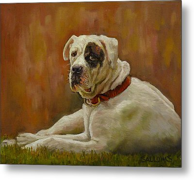 Munson An American Bull Dog Metal Print by Nora Sallows