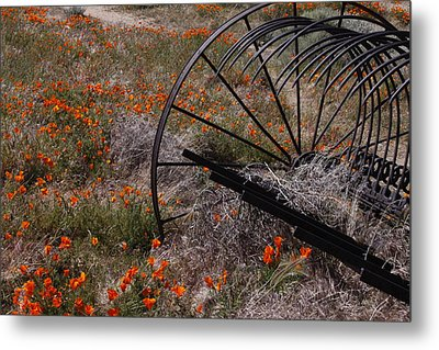 Munz Poppy Metal Print by Ivete Basso Photography