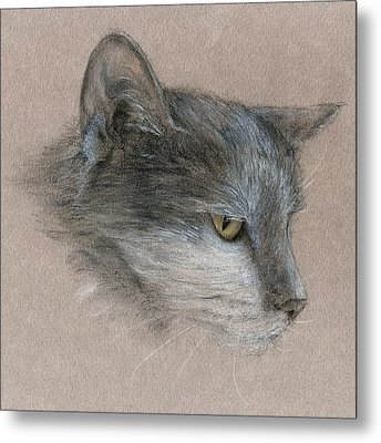 Metal Print featuring the drawing Murray The Cat by Penny Collins