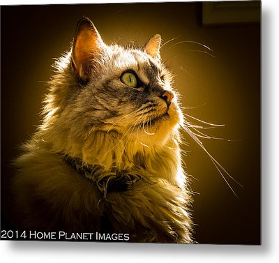 Muse In The Sun Metal Print by Janis Knight