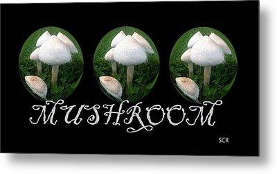 Mushroom Art Collection 2 By Saribelle Rodriguez Metal Print by Saribelle Rodriguez