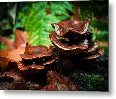 Mushroom Family Portrait Metal Print by Haren Images- Kriss Haren