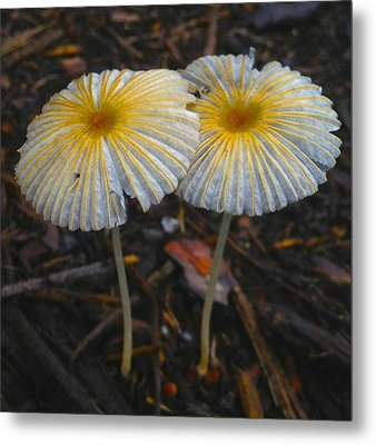 Mushroom Flowers Metal Print by Jennifer Lamanca Kaufman