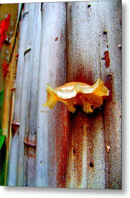 Mushroom On Bamboo Metal Print