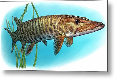 Muskellunge Metal Print by Roger Hall
