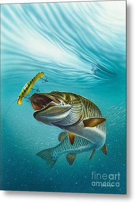 Muskie Troll Metal Print by Jon Q Wright