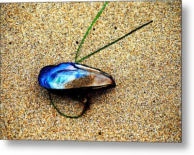 Metal Print featuring the photograph Mussel Shell And Seagrass by Bob Wall