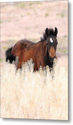 Metal Print featuring the photograph Mustang Colt In The Grasses by Vinnie Oakes