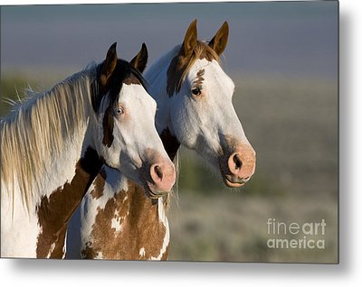 Mustang Mare And Son Metal Print by Jean-Louis Klein and Marie-Luce Hubert