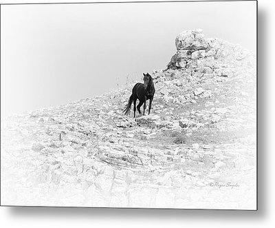 Mustang On Hill 2 Bw Metal Print