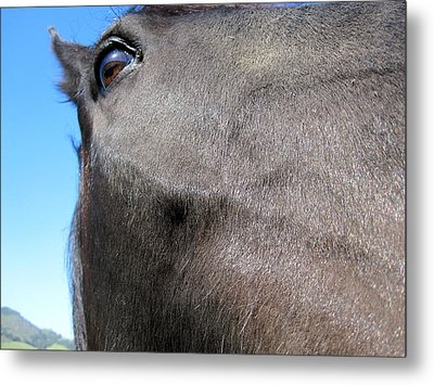 Metal Print featuring the photograph Mustang by Paul Foutz