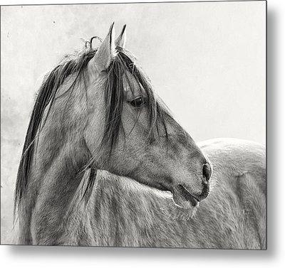 Mustang Metal Print by Ron  McGinnis