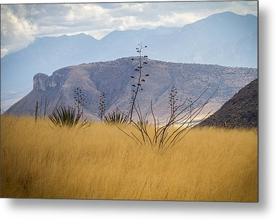 Metal Print featuring the photograph Mustang View by Beverly Parks