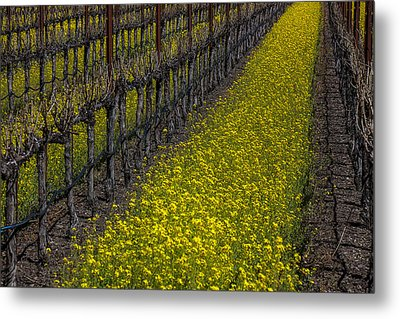 Mustrad Grass In The Vineyards Metal Print by Garry Gay