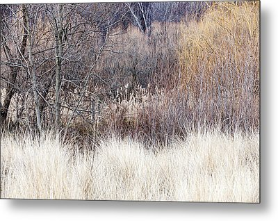 Muted Colors Of Winter Forest Metal Print by Elena Elisseeva