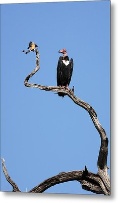 Mutual Admiration Metal Print by Fotosas Photography