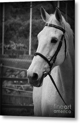 Metal Print featuring the photograph My Best Friend by Clare Bevan