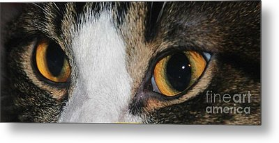 My Cat Is The Cat Of All Cats Metal Print by PainterArtist FIN