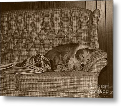 My Dog Sleeping On The Couch Circa 1976 Metal Print by ImagesAsArt Photos And Graphics
