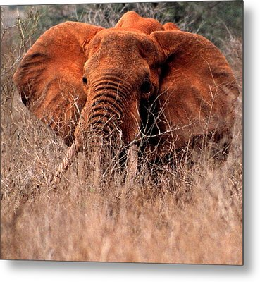 My Elephant In Africa Metal Print