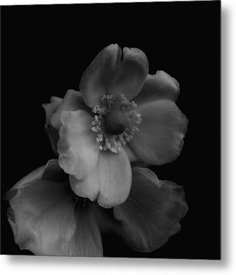 Metal Print featuring the photograph My Fair Lady by Rachel Mirror