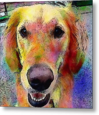 My Friends Dog #portrait #dogportrait Metal Print by Robin Mead