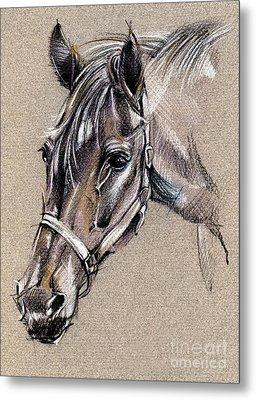 My Horse Portrait Drawing Metal Print by Daliana Pacuraru