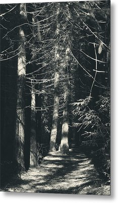 My Light Still Shines For You Metal Print by Laurie Search