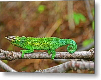 My Magical Tail Metal Print by Peggy Collins