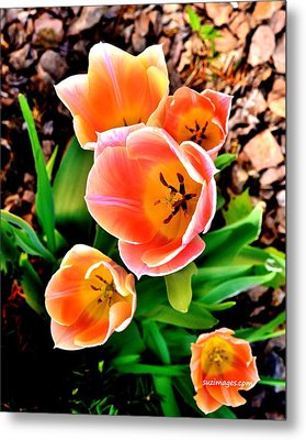 My Mom's Tulips Metal Print