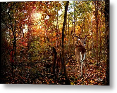 My Place Metal Print by Bill Stephens