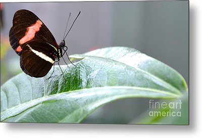 Metal Print featuring the photograph My Pretty Butterfly by Carla Carson