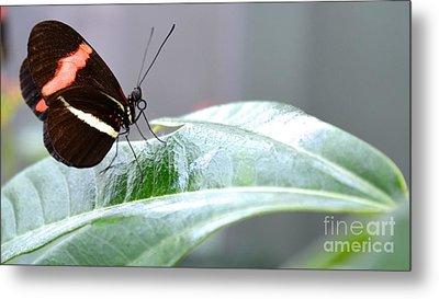 My Pretty Butterfly Metal Print by Carla Carson