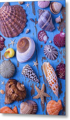 My Shell Collection Metal Print by Garry Gay