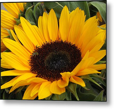 My Sunshine Metal Print by Dora Sofia Caputo Photographic Art and Design