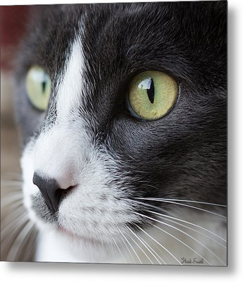 Metal Print featuring the photograph My Sweet Boy by Heidi Smith