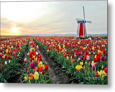 My Touch Of Holland 2 Metal Print by Nick  Boren