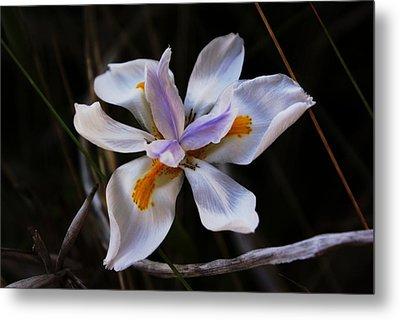 My Wild Iris Rose Too Metal Print by Debbie May