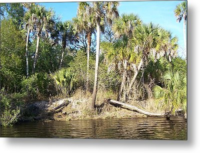 Metal Print featuring the photograph Myakka River by John Mathews