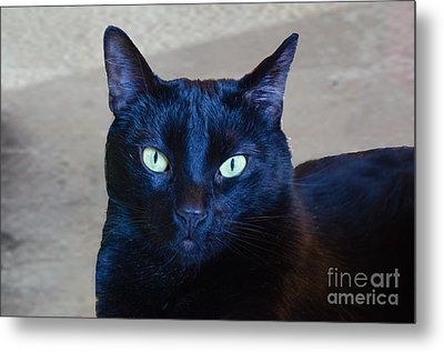 Mysterious Black Cat Metal Print by Luther Fine Art
