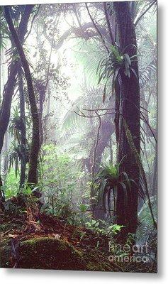 Mysterious Misty Rainforest Metal Print by Thomas R Fletcher