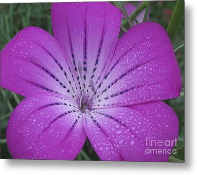 Mysterious Photography Metal Print by Tina Marie