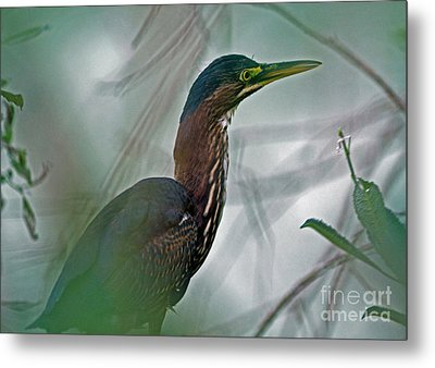 Mystery In The Marsh Metal Print by Inspired Nature Photography Fine Art Photography