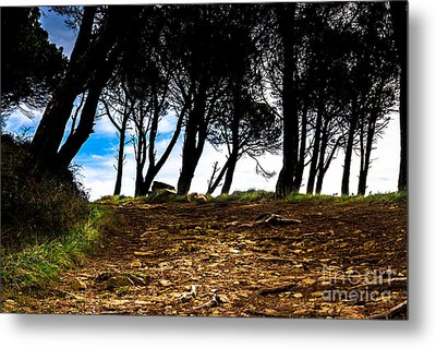 Mystery Of The Forest Metal Print by Edgar Laureano